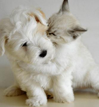 5 consejos para la convivencia entre perros y gatos