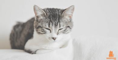 ¿Por qué mi gato ronronea?