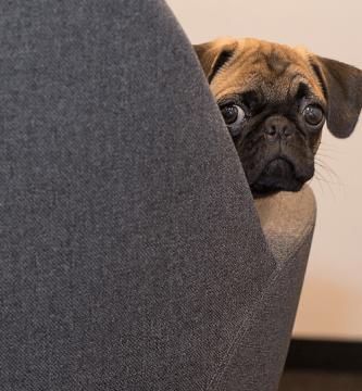 cosas comunes que pueden matar a tu perro