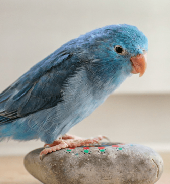 Nombres para pájaros