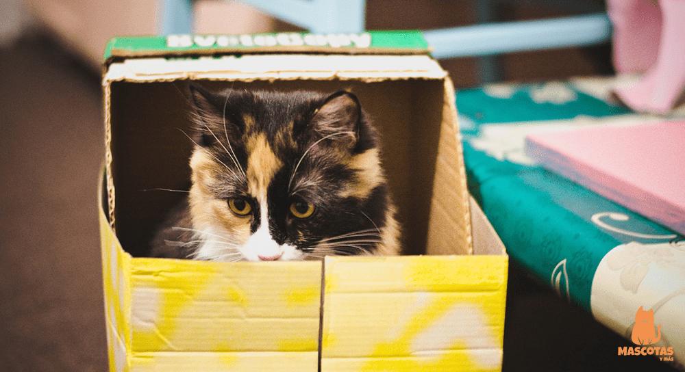 Gato dentro de una caja de cartón