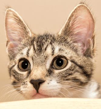 Juegos para entretener gato