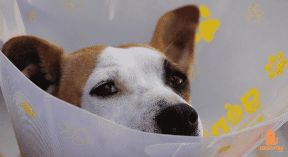 Perro con tratamiento