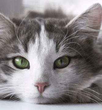 Tipos de arena para gatos