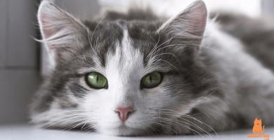 Tipos de arena para gatos ¿Cómo elegir la mejor?
