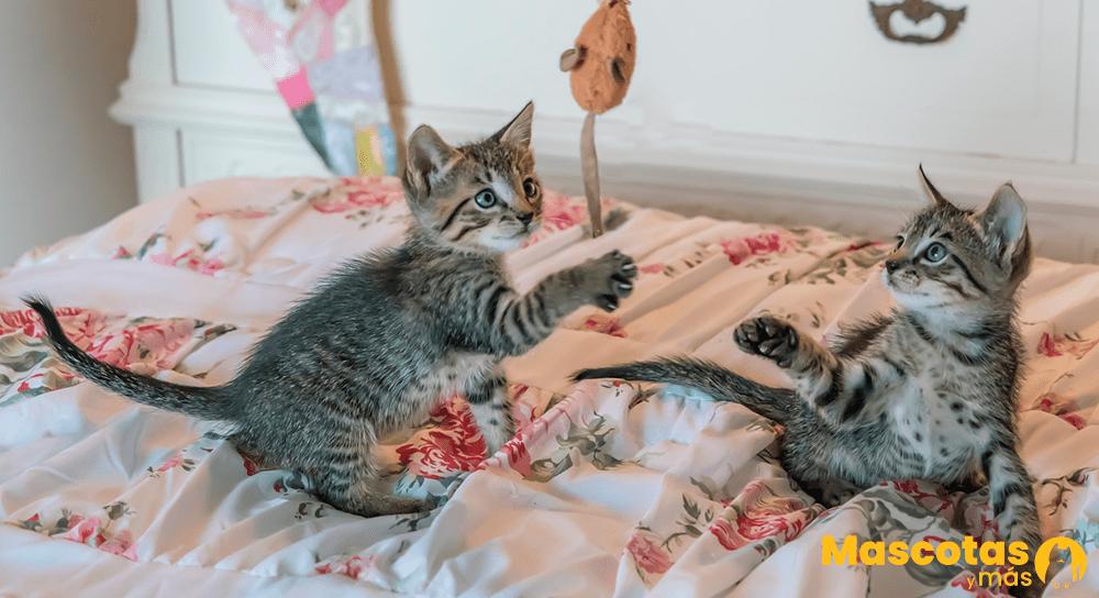 Dos gatitos jugando con juguete