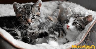 ¿Cómo educar a un gato desde que es pequeño?