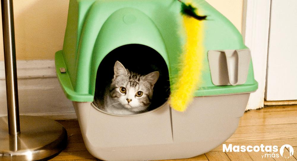 Gatito usando arenero