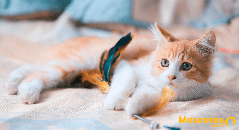 Gato jugando con caña
